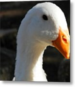 The Injured Duck Metal Print