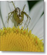 The Itsy Bitsy Spider Metal Print