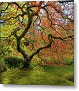 The Japanese Maple Tree In Spring Metal Print
