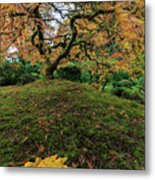 The Japanese Maple Tree In Autumn 2016 Metal Print
