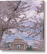 The Jefferson Memorial Attracts Large Crowds At The Cherry Blossom Festival Metal Print