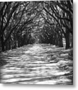 Live Oaks Lane With Shadows - Black And White Metal Print