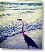 The Joy Of Ocean And Bird Metal Print
