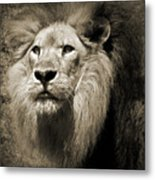 The King II Metal Print