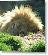 The King Of The Jungle Metal Print