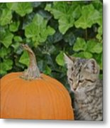 The Kitten And The Pumpkin Metal Print