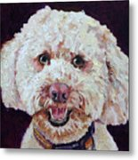 The Labradoodle Metal Print