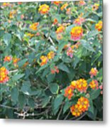 The Lantana In The Near 20 Metal Print