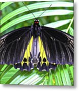 The Largest Butterfly In The World Metal Print