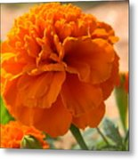 The Last Marigold Metal Print