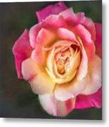 The Last Rose Of Summer, Painting Metal Print