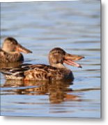 The Laughing Duck Metal Print by Wingsdomain Art and Photography