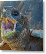 The Laughing Tortoise Metal Print