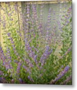 The Lavender Outside Her Window Metal Print