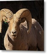 The Leader Of The Pack Metal Print