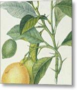 The Lemon Tree Metal Print