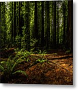 The Light In The Forest No. 2 Metal Print