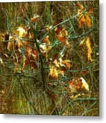 The Light In The Forest Metal Print