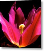 The Light Of Day Metal Print