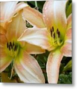 The Lillies Have It Metal Print