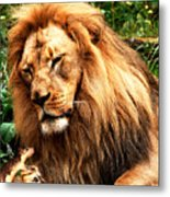 The Lion And The Mouse Metal Print