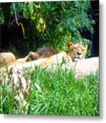 The Lion Awakes Metal Print