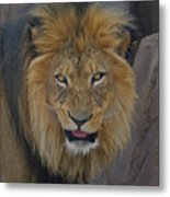 The Lion Dry Brushed Metal Print