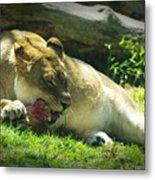 The Lion Eats Today Metal Print