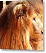 The Lion King's New Hairdont Metal Print