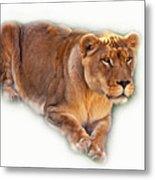 The Lioness - Vignette Metal Print