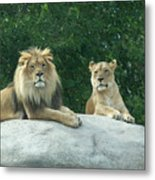 The Lions Metal Print