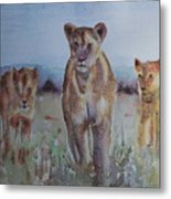 The Lions Of Africa 1 Metal Print
