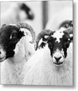 The Locals Metal Print