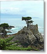 The Lone Cypress Stands Alone Metal Print