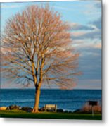 The Lone Maple Tree Metal Print