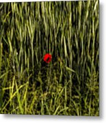 The Loneliness Of A Poppy Metal Print