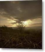 The Lonely Bush Metal Print