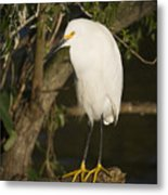 The Lonely Snowy Egret Metal Print