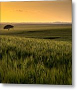 The Lonely Tree, Israel Landscape Metal Print