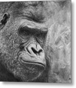 The Look Metal Print by Jeff Swanson