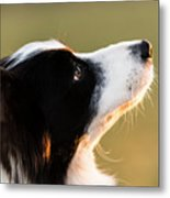 The Look Of A Dog Metal Print