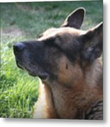 The Love Of An Old Dog Metal Print