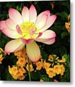 The Lovely Lotus Metal Print