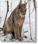 The Lynx Metal Print