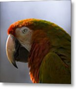 The Macaw Portrait Metal Print
