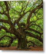 The Magical Angel Oak Tree Panorama  Metal Print
