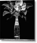 The Magnolia And Pepsi Still Life Black And White Metal Print