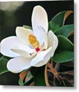 The Magnolia Metal Print by Mamie Thornbrue