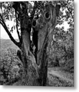 The Maltreated One Metal Print