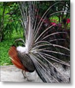The Many Quills Of A Peacock Metal Print